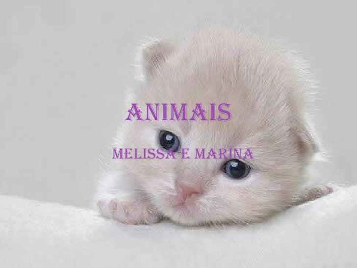 Animais Melissa e Marina