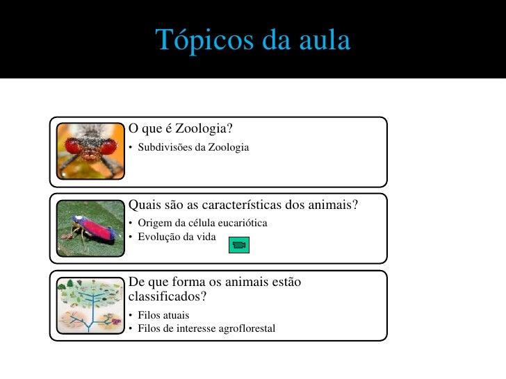 Tópicos da aulaO que é Zoologia?• Subdivisões da ZoologiaQuais são as características dos animais?• Origem da célula eucar...