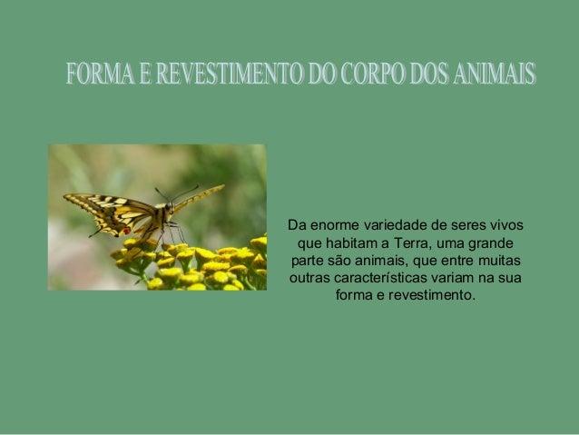 Da enorme variedade de seres vivos que habitam a Terra, uma grande parte são animais, que entre muitas outras característi...