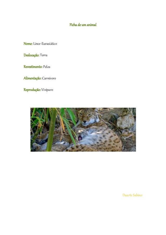 Ficha de um animal Nome: Lince-Eurasiático Deslocação: Terra Revestimento: Pelos Alimentação: Carnívoro Reprodução: Vivípa...