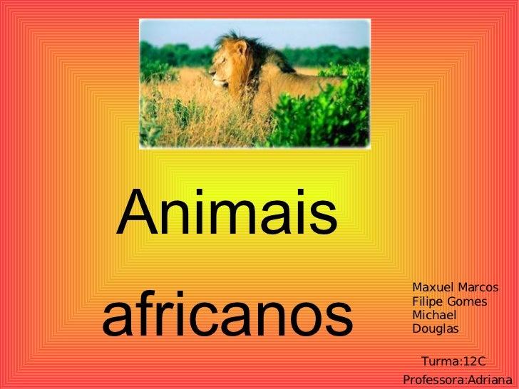 Animais  africanos  Maxuel Marcos Filipe Gomes Michael Douglas Turma:12C Professora:Adriana