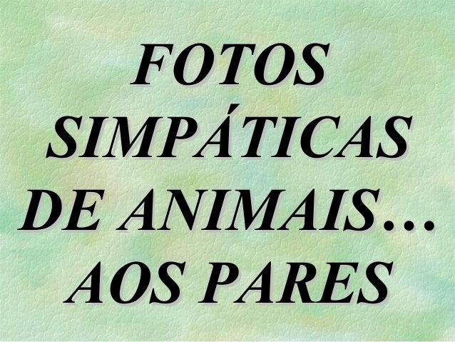 FOTOS SIMPÁTICAS DE ANIMAIS… AOS PARES