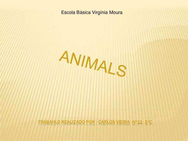 Escola Básica Virgínia Moura<br />ANIMALS<br />TRABAHLO REALIZADO POR : CARLOS VIEIRANª11  5ºC<br />
