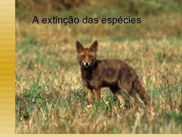A extinção das espécies