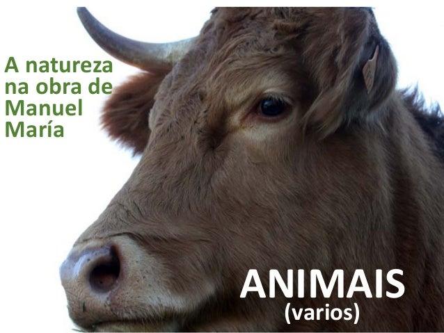 ANIMAIS(varios) A natureza na obra de Manuel María
