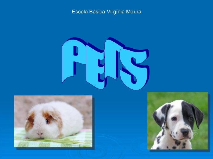 PETS Escola Básica Virgínia Moura