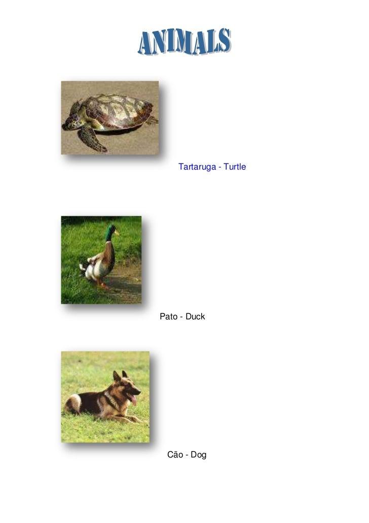 Tartaruga - Turtle<br />Pato - Duck<br />Cão - Dog <br />                  Ox – Ox <br />                Cavalo - Horse<b...