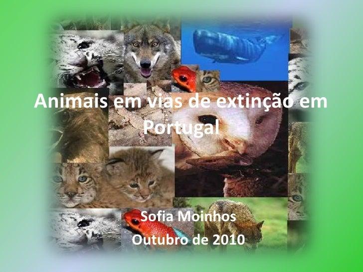 Animais em vias de extinção em Portugal<br />Sofia Moinhos<br />Outubro de 2010<br />
