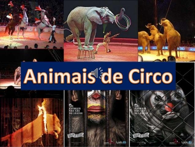  Antes de chegarem ao Circo, passam por meses de tortura, que começa na captura no seu habitat natural.  São lançados, a...