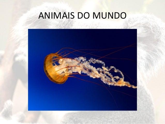 ANIMAIS DO MUNDO