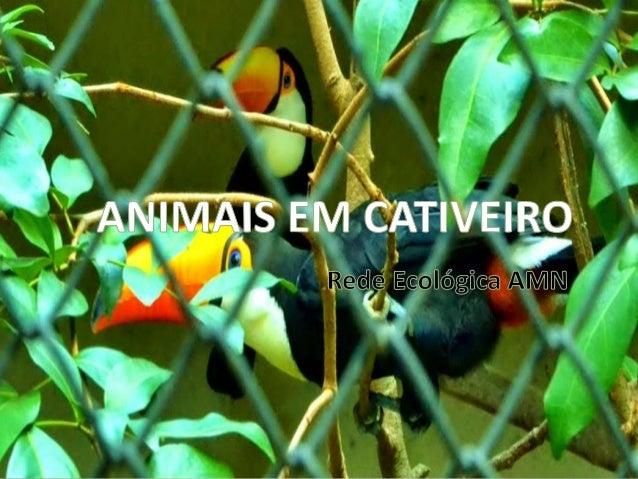 • A ação do homem atualmente na natureza vem causando sérios tipos de problemas como desmatamento e poluição. Com isso, o ...