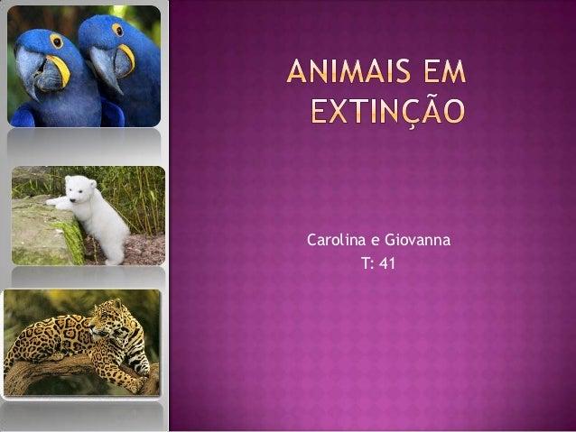 Carolina e Giovanna       T: 41