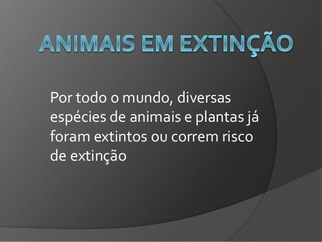 Por todo o mundo, diversas espécies de animais e plantas já foram extintos ou correm risco de extinção