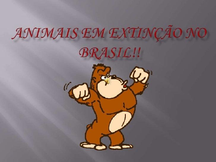 Animais em Extinção no Brasil!!<br />