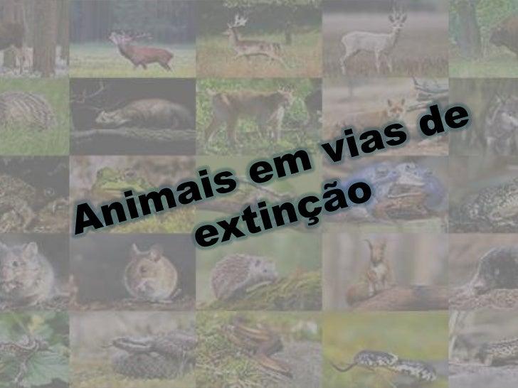Extinção Extinção em biologia e ecologia é o total desaparecimento  de espécies, subespécies ou grupos de espécies. O mo...