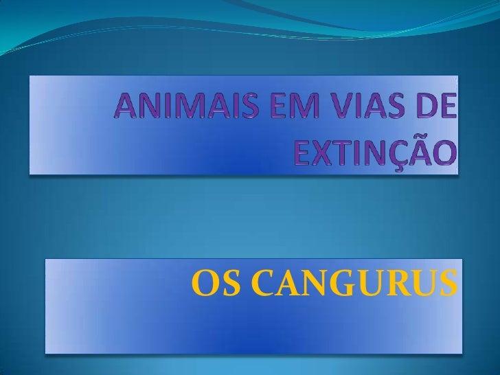 OS CANGURUS