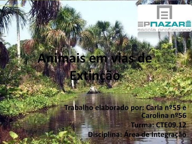 Animais em vias de Extinção<br />Trabalho elaborado por: Carla nº55 e Carolina nº56<br />Turma: CTE09.12<br />Disciplina: ...