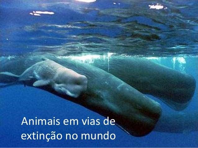 Animais em vias de extinção no mundo