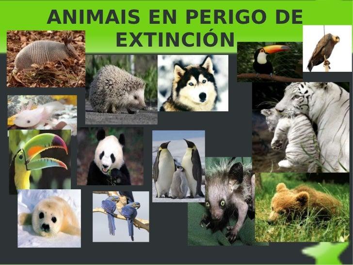 ANIMAIS EN PERIGO DE EXTINCIÓN