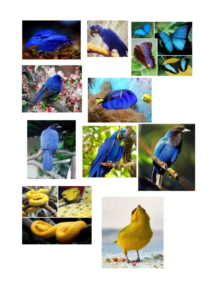 Animais e suas cores