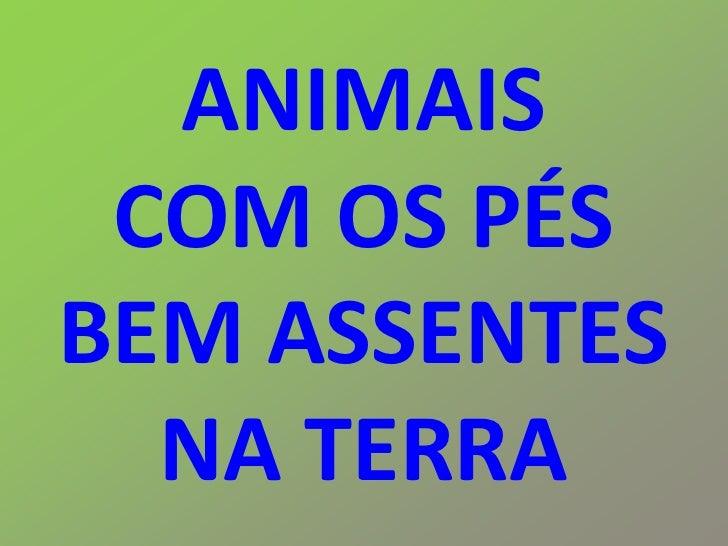 ANIMAIS  COM OS PÉS BEM ASSENTES   NA TERRA
