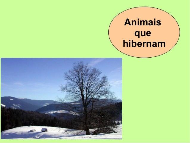 Animais que hibernam