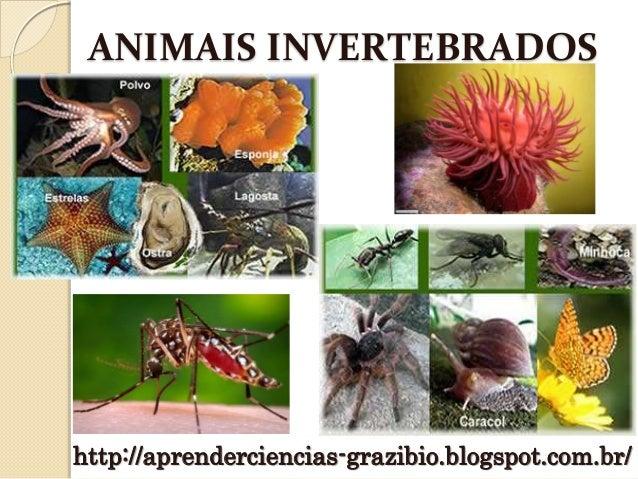 ANIMAIS INVERTEBRADOS http://aprenderciencias-grazibio.blogspot.com.br/