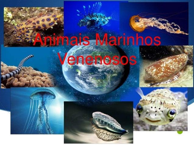 S  Animais Marinhos  Venenosos