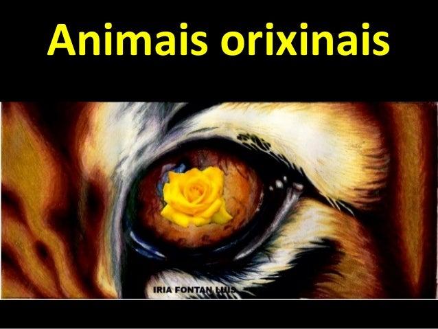 Animais orixinais Alumnado 1º ESO