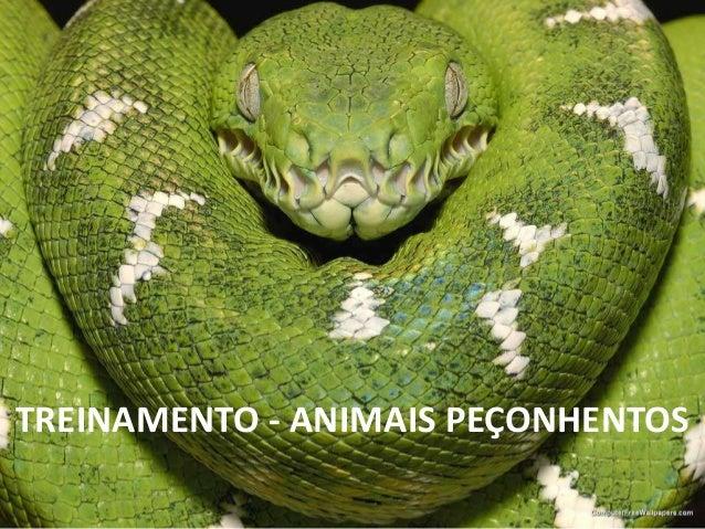 TREINAMENTO - ANIMAIS PEÇONHENTOS