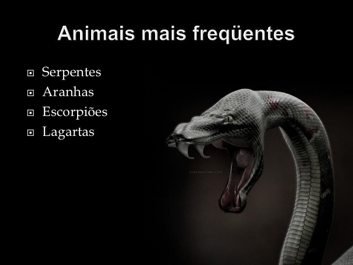 Animais peçonhentos ofidismo Slide 3