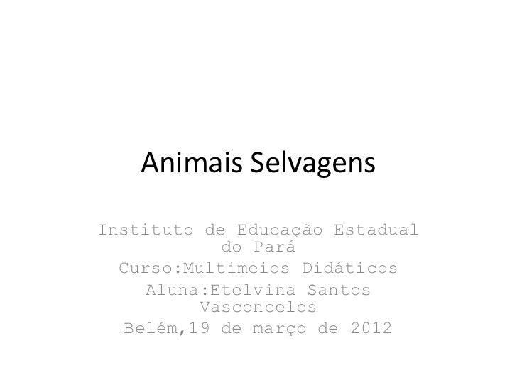 Animais SelvagensInstituto de Educação Estadual            do Pará  Curso:Multimeios Didáticos    Aluna:Etelvina Santos   ...