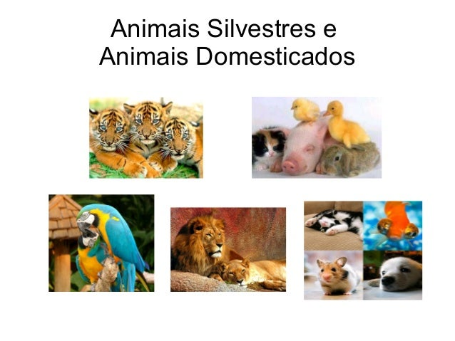 Animais Silvestres e Animais Domesticados