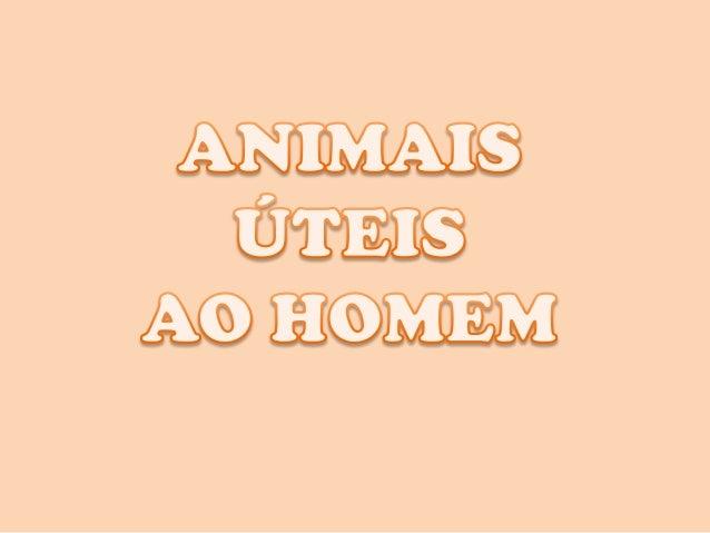 Todos os animais são importantes. Noentanto, alguns se destacam para o serhumano, por serem capazes de melhorar asua vida ...