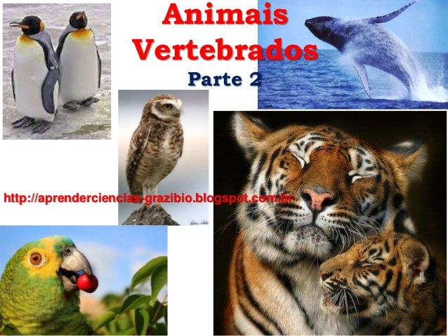 Animais Vertebrados Parte 2 http://aprenderciencias-grazibio.blogspot.com.br/
