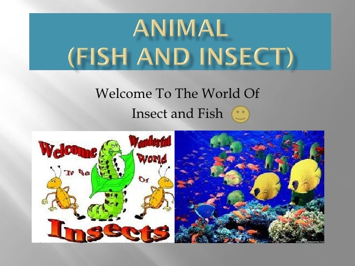 Welcome To The World Of     Insect and Fish