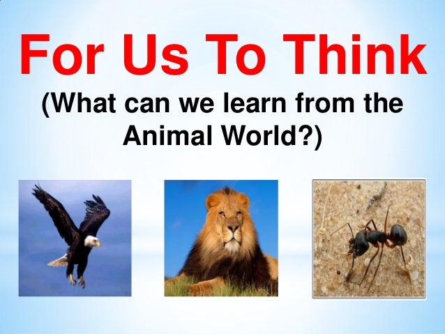 For Us To Think (What can we learn from the Animal World?)