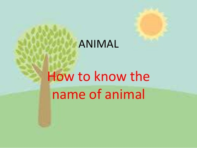 ANIMAL How to know the name of animal