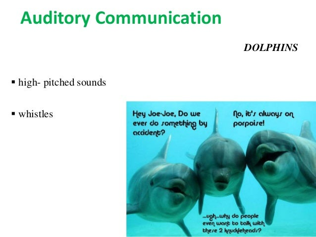 Animal Communicators in the United States