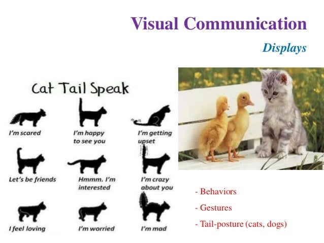 animal communication Why study animal communication • central to the study of animal behavior and societies • tool for elucidating general evolutionary principles.