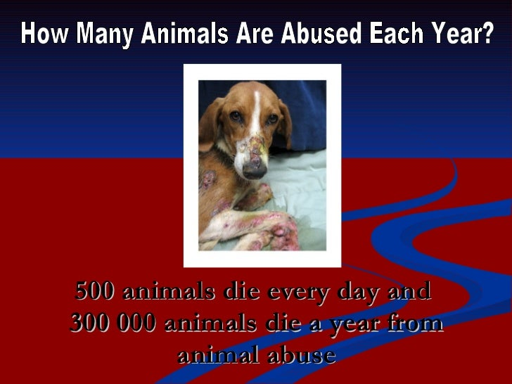 Animal Shelters Food For Dogs