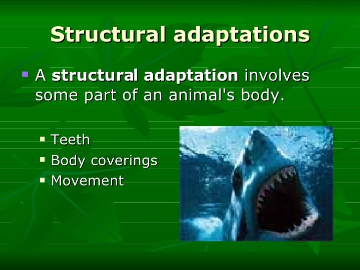 animal adaptation - photo #20