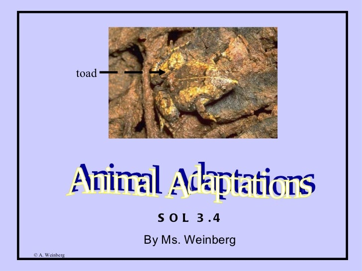 Animal Adaptations SOL 3.4 By Ms. Weinberg  toad