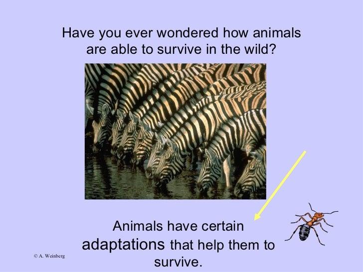 Animal adaptations-ppt Slide 2