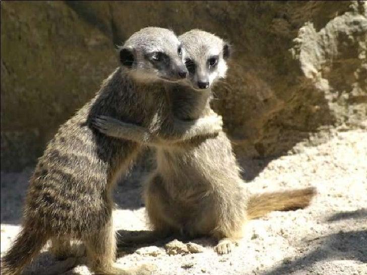 Animal Affection Slide 3