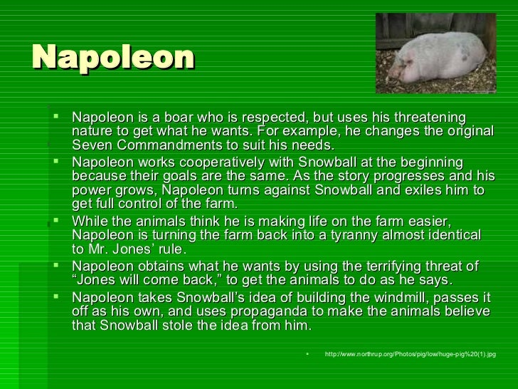 napoleon from animal farm In animal farm, by george orwell, napoleon was a very helpful animal, but after he gained power, he became an utterly corrupt opportunist and very rarely thought of others.