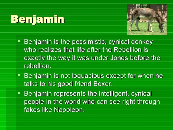 character analysis on boxer animal farm Boxer (a horse) back next  character analysis brawn not brains boxer is the strongest animal on the farm, an enormous beast, nearly eighteen hands high, and as.