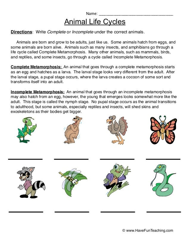 Animal life-cycles-worksheet