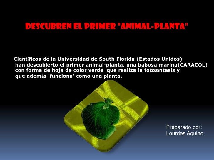 El Animal - planta