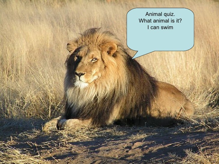 Animal quiz. What animal is it? I can swim